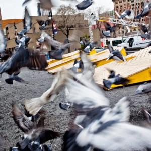 RIDM2013-emilygan-pigeons