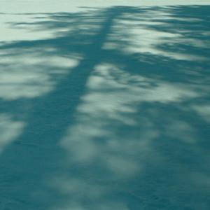 square-tree